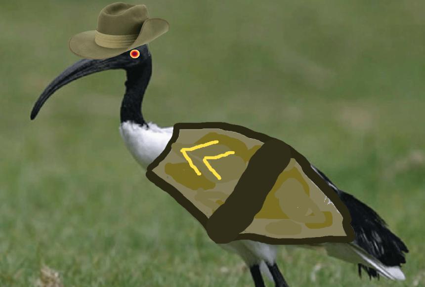 ibis bin chicken dump rat australia
